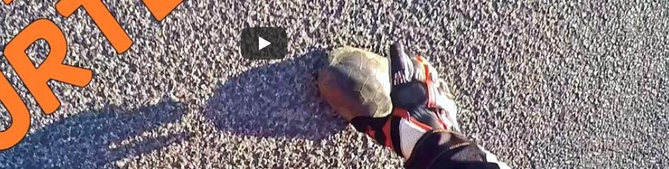 Teknős-mentés KTM-el